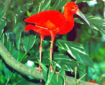 "the negative pride of the narrator in scarlet ibis a short story by james hurst Glossary of literary terms act an act is a  short story a short story is a work of fiction  the theme of ""the scarlet ibis"" by james hurst might be."
