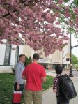 cherry blossoms at nephews