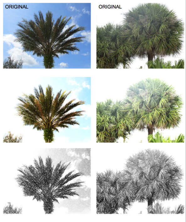 looking up at palm trees-2_photo_editing