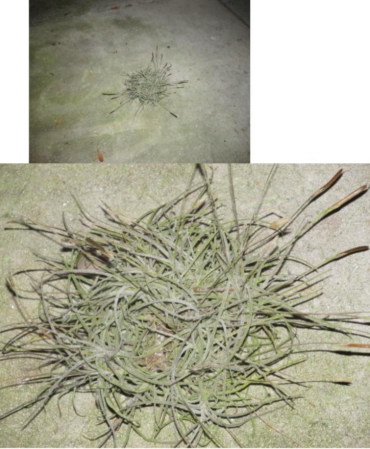 moss on ground_priorhouse
