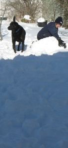 white snow with black dog