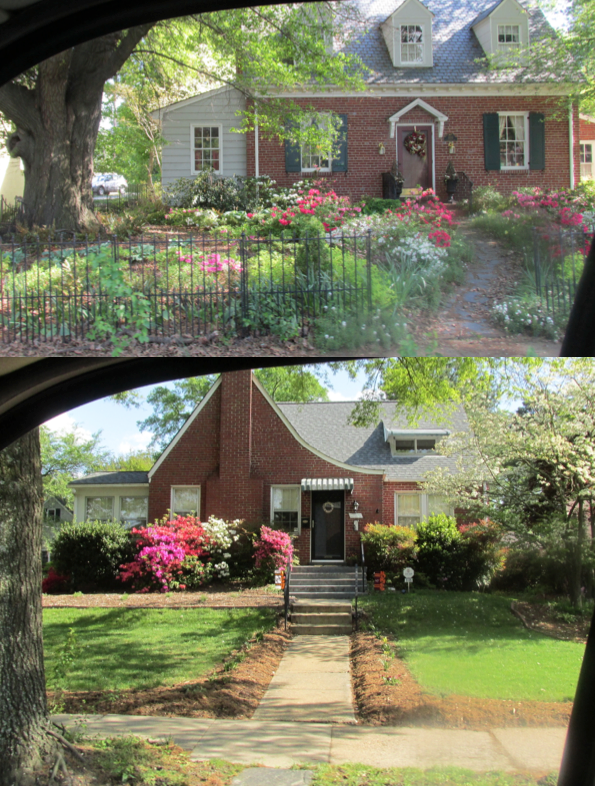 charming houses on laburnum avenue with established blooming azaleas-priorhouse2014