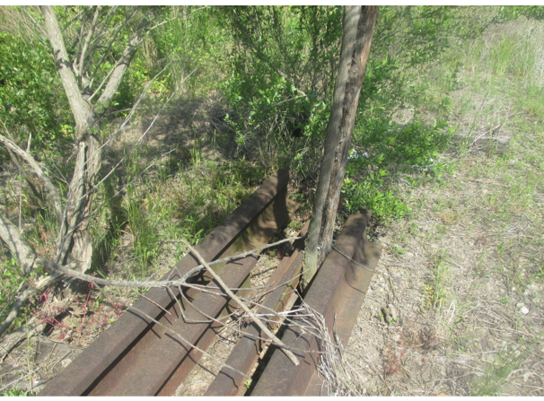 tree growing out of a train track - priorhouse 2014