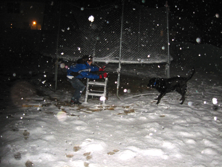 lab in snow at night