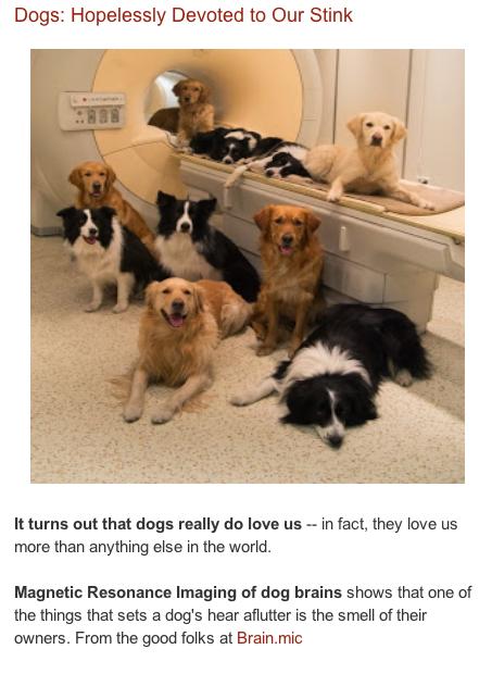 terrierman blog post