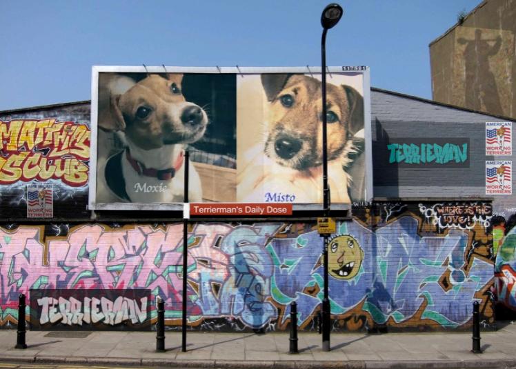 terrierman