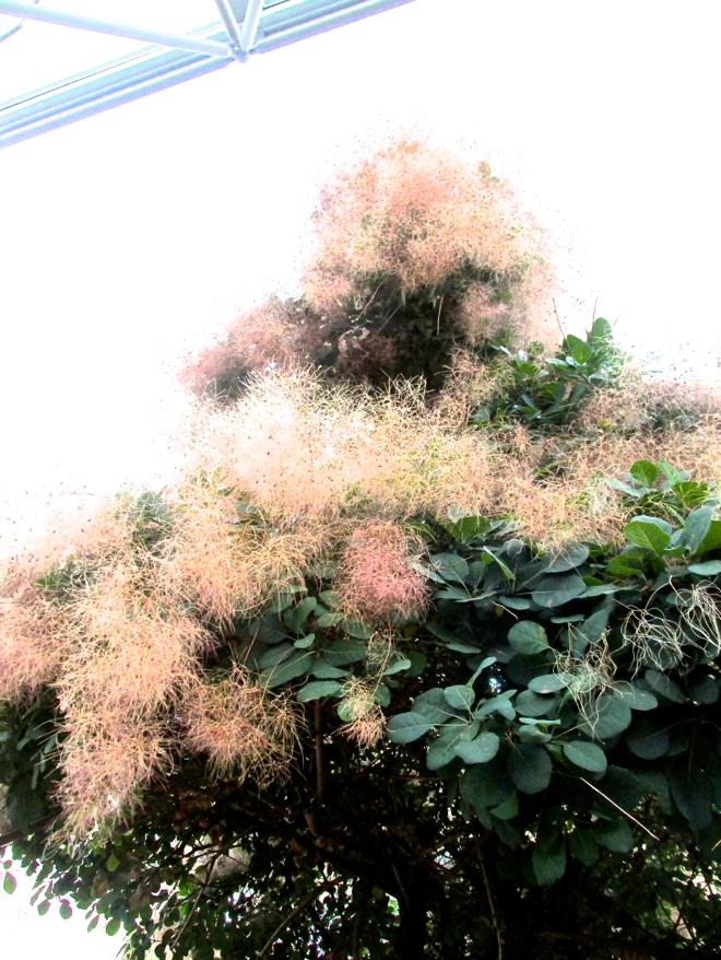 beige blooms two