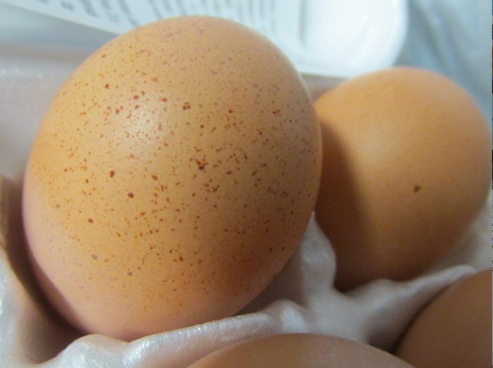 egg - large brown spotted egg
