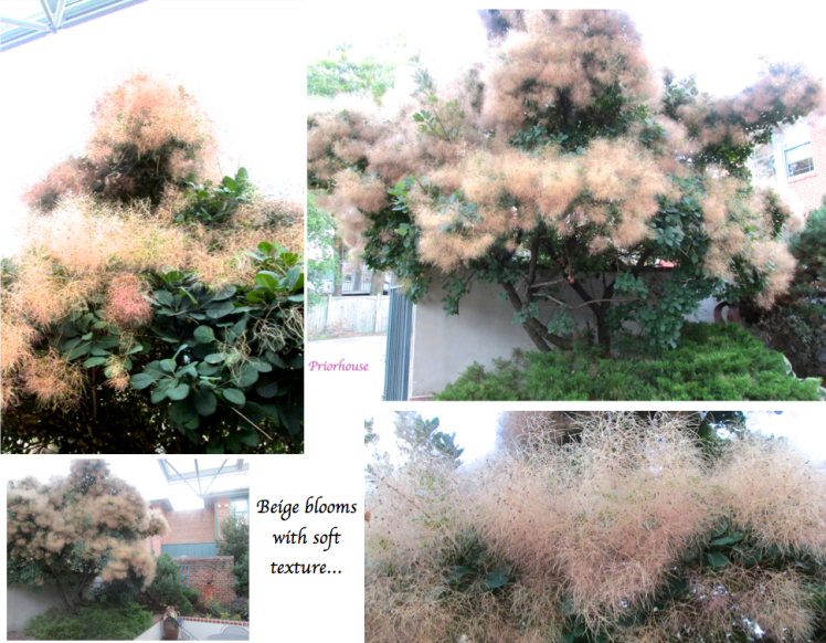 tree with beige blooms with soft texture