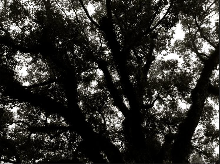 old tree-2