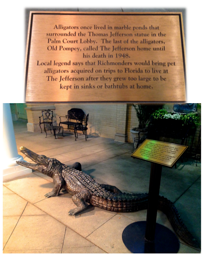 alligators at the jefferson hotel