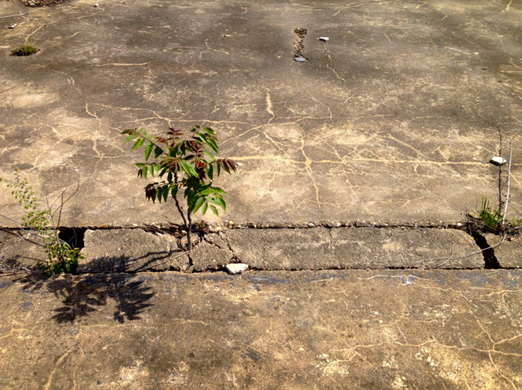 small tree in pavement old shop center