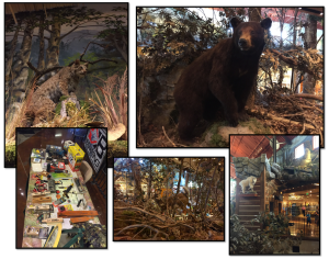 collage-bass pro shops - prior 2016