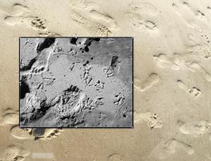 footprints in sand-prior-2016