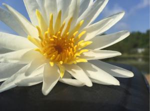 ww-flower-8-open-sc-2016