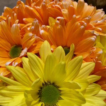 flowers-priorhouse