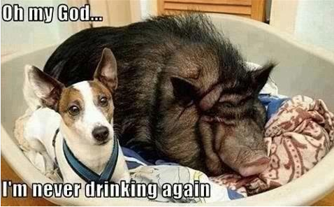never drinking again - dog comic