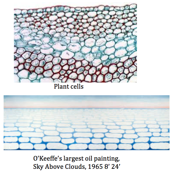 art-plant-cells-and-okeeffe-art