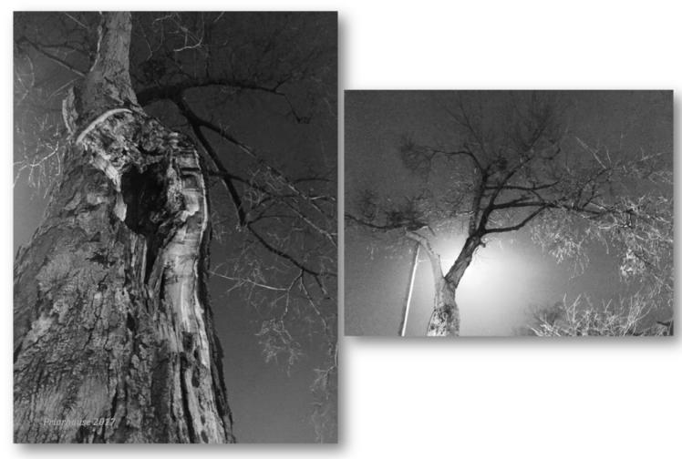 walk-two-trees