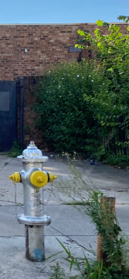 hydrant-exspalsh yellow