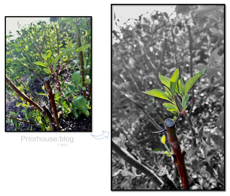 lens-6-19-green growth sprout on branch