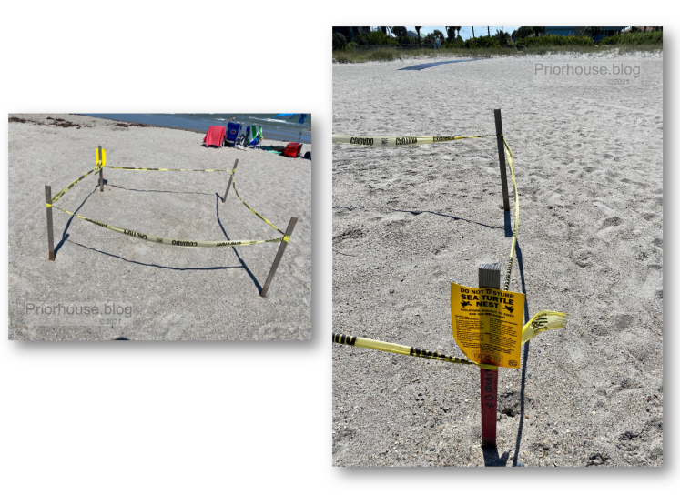 shadow-shade-lens-artist-june-2021- sea turtle nest taped off