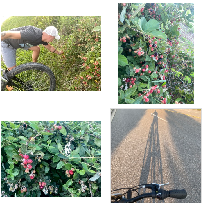 bike tree square berries and honey suckle in wild