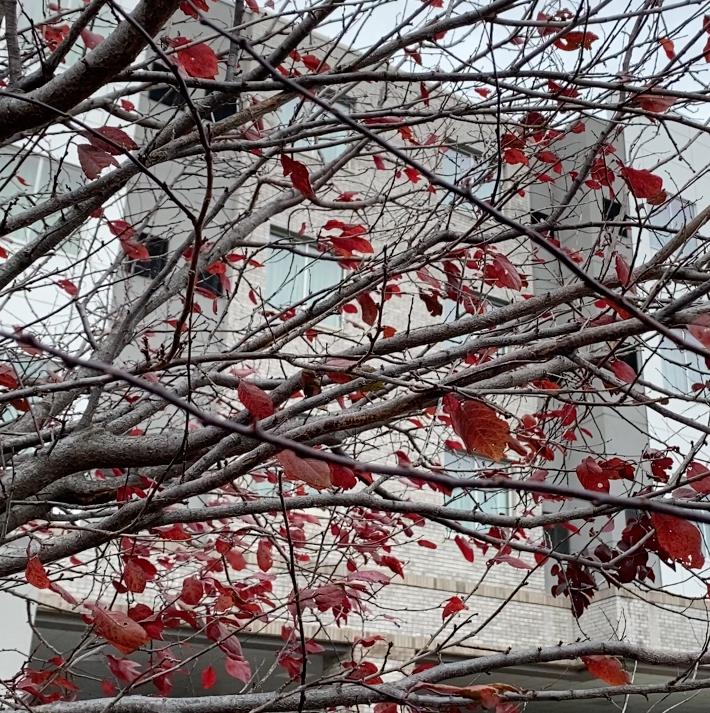 tree square seasons fall leaves buffalo ny
