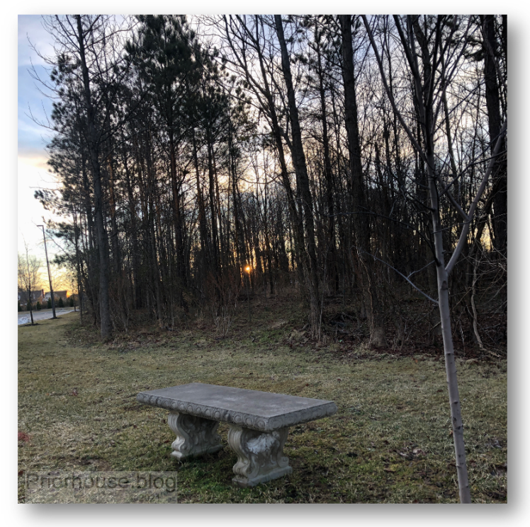 tree square seat bench spring trees